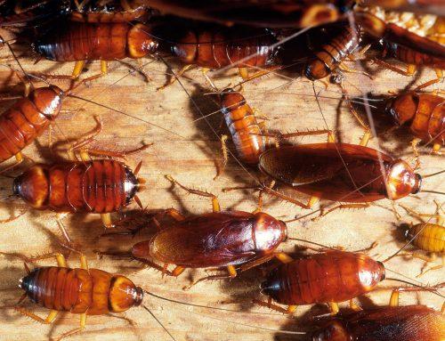 Una plaga de cucarachas invade un centro de salud