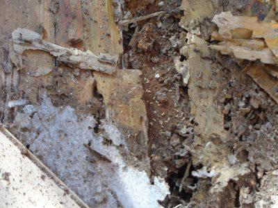 control plaga termitas